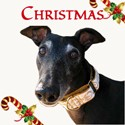 Christmas Collar Collection